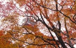 11.26_紅葉とゴンドラ