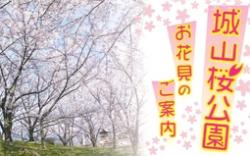 城山桜公園チラシ