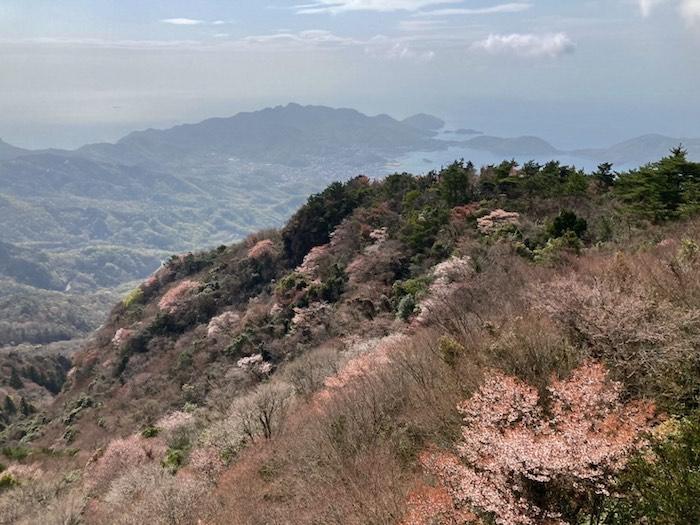 四方指大観峰の山桜_21.04.03